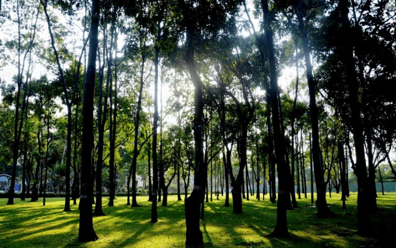Gia Dinh Park