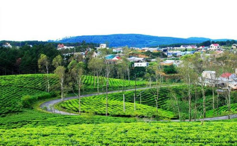 Cau Dat Tea Hills