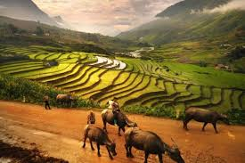 Sin Cai Village Ethnic Travel