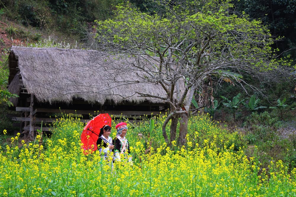 The girl in ethnic minority Hmong gardens.