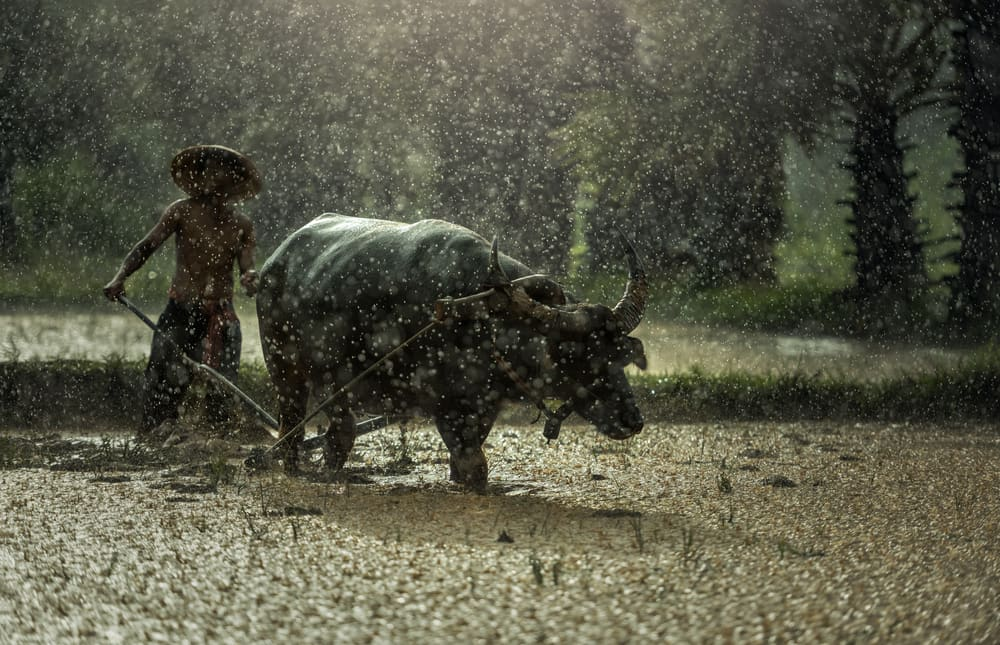 Top Reasons for going to Vietnam during Vietnam rainy season